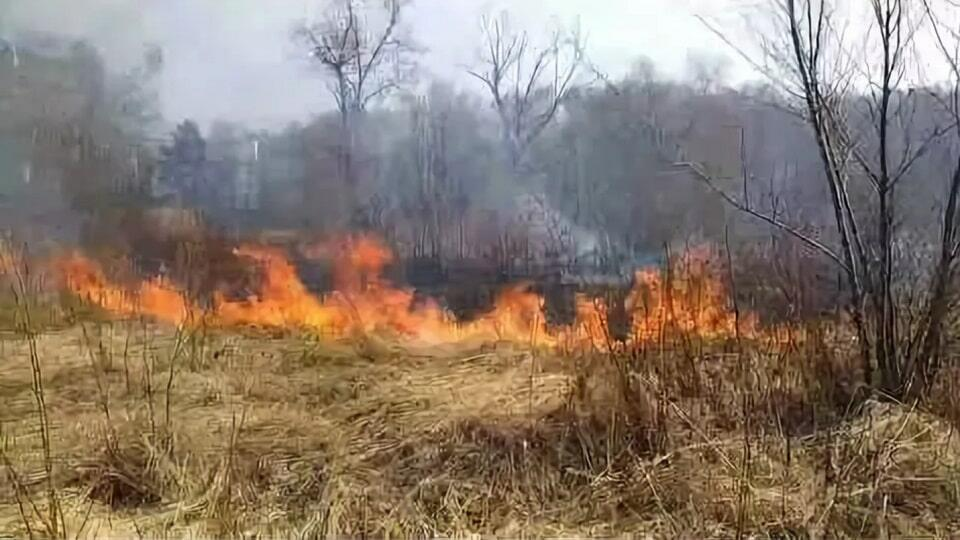 Пожар Лосиный остров