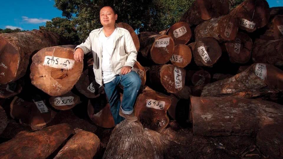 Китайцы вырубают российский лес