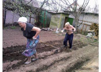Бедные на своем огороде
