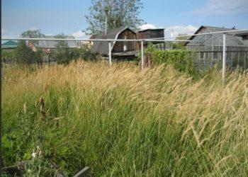 Нескошенная трава
