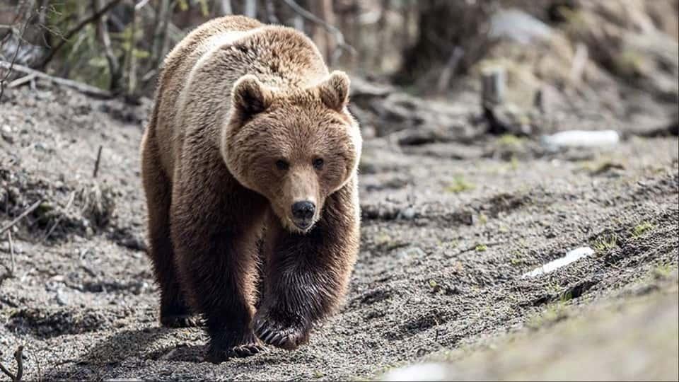 Медведь напал на грибника
