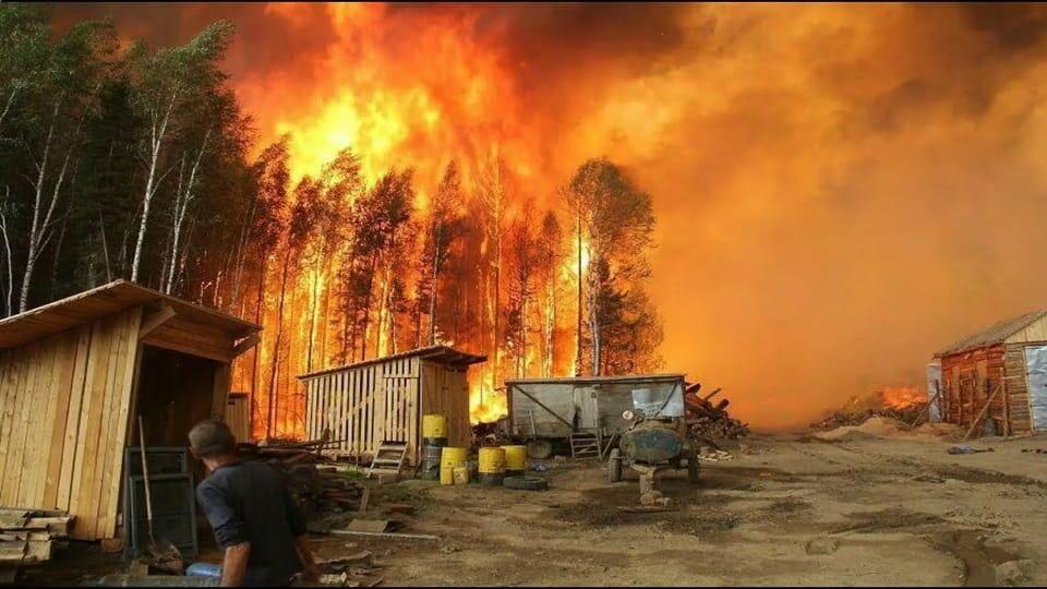 Поджоги лесов