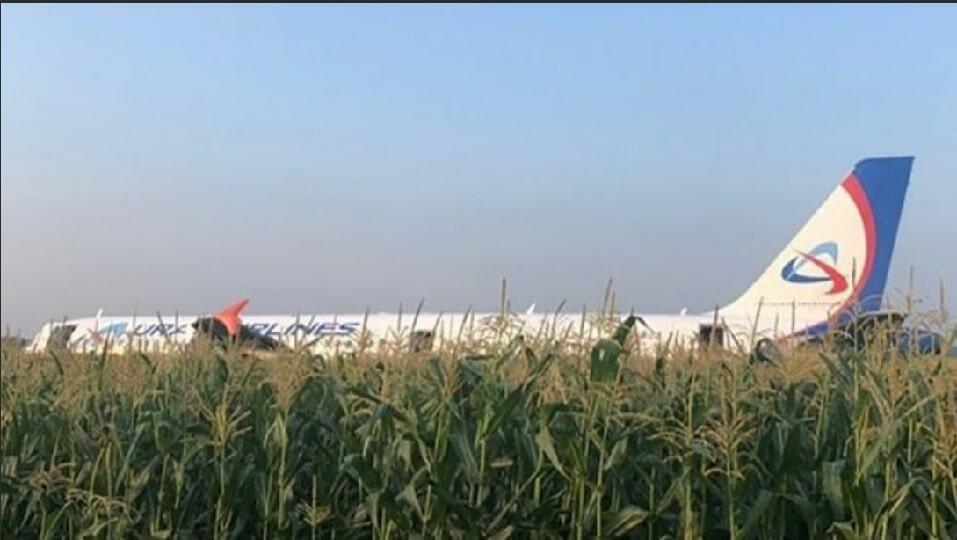 Самолет в кукурузном поле