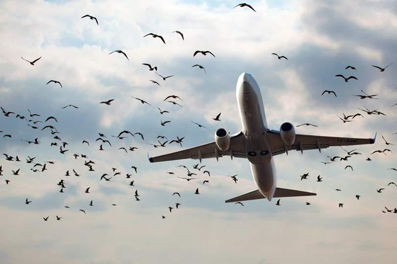 Птички в аэропорту