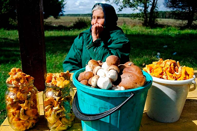 Бабушка продает грибы