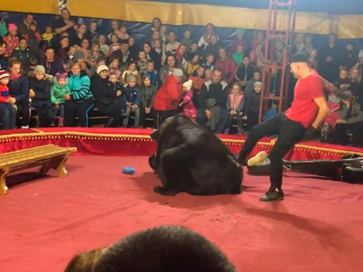 Медведь напал на дрессировщика в цирке