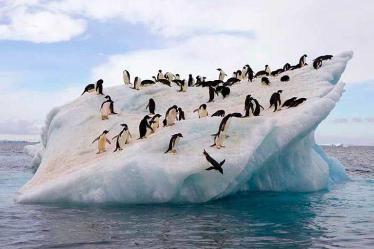 В Антарктиде зафиксирована температура выше 20 градусов по Цельсию