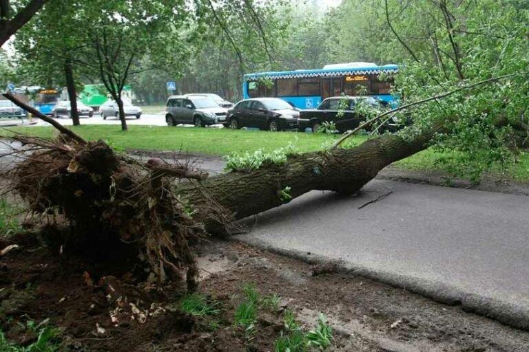 Последствия непогоды привели к повреждению 42-х автомобилей и 105-ти упавшим деревьям