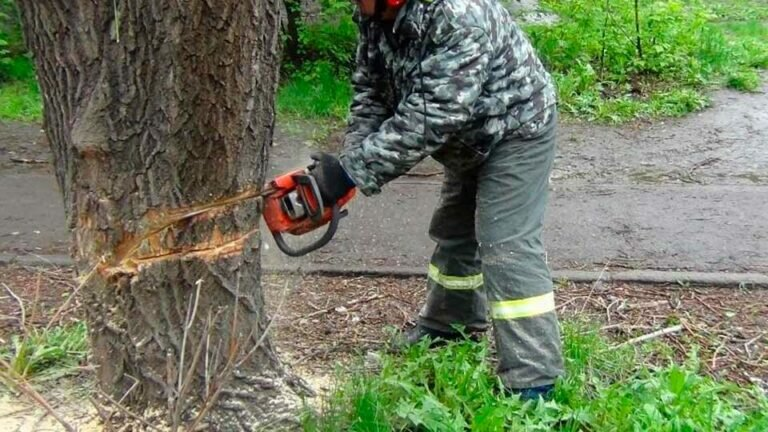 Во время работ по спиливанию деревьев в Новой Москве, погиб прохожий