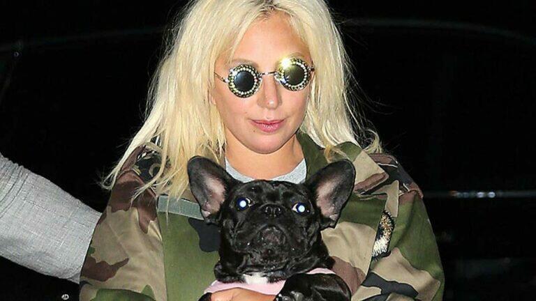 Полиция вернула леди Гаге собак, которых у нее похитили