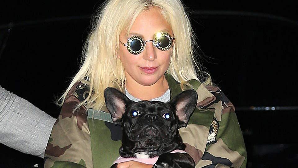 Леди Гага с собакой