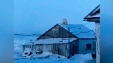 Белый медведь на крыше