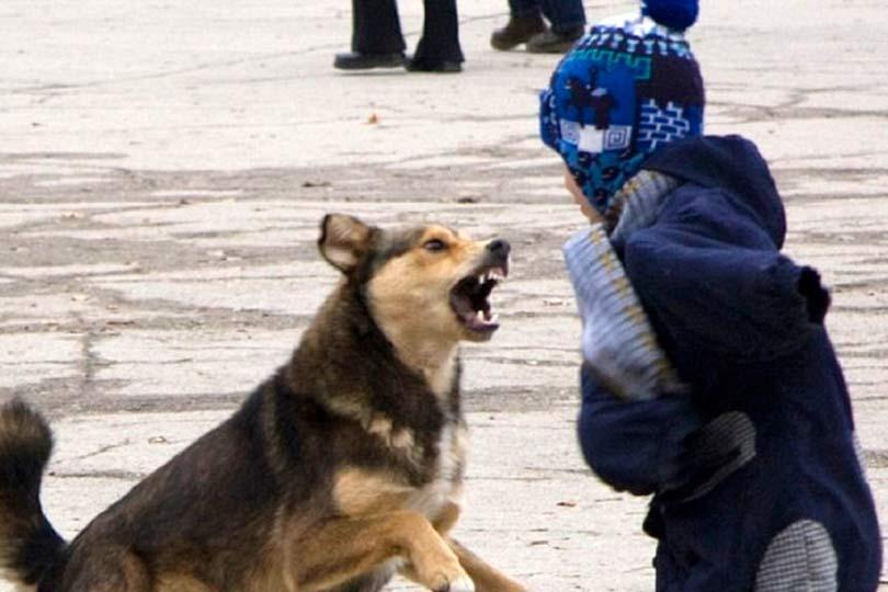Нападение собаки на ребенка