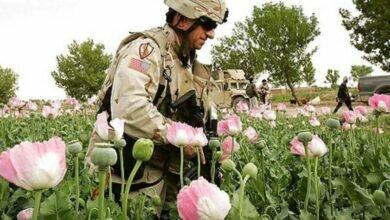 Военные США на плантации с маком