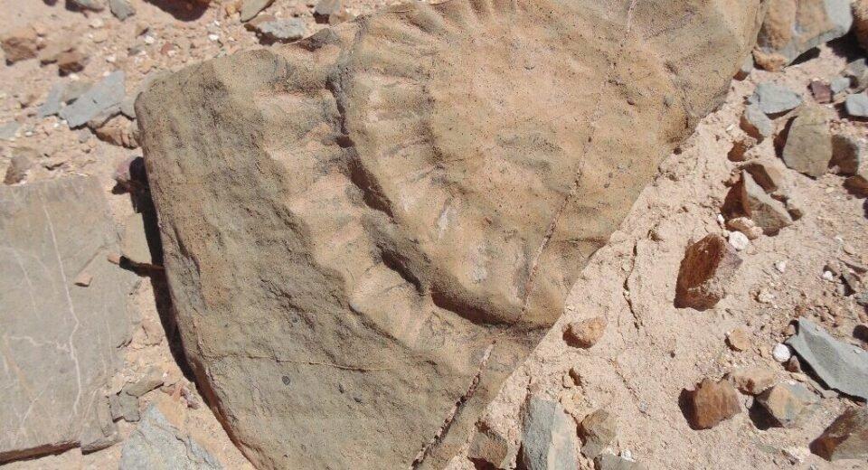 Раскопка в Чили